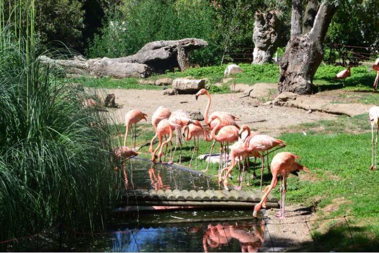 Como llegar al Zoo en Madrid