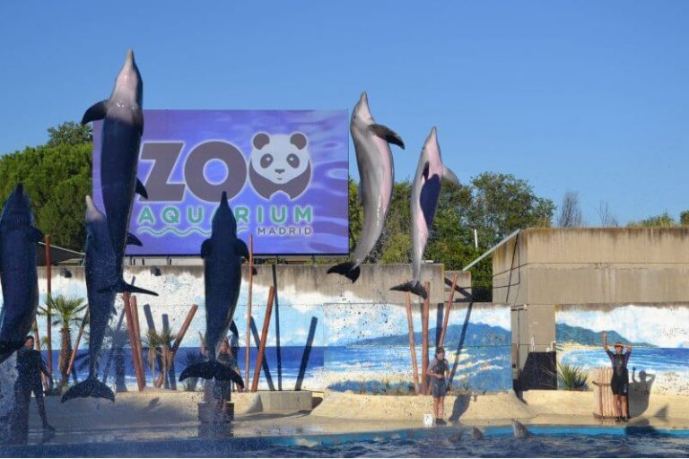 Como ir al zoo de Madrid